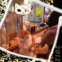 Catcounter_2