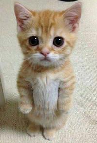 Poorcat_4