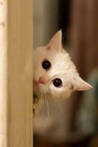 Hellocat_2